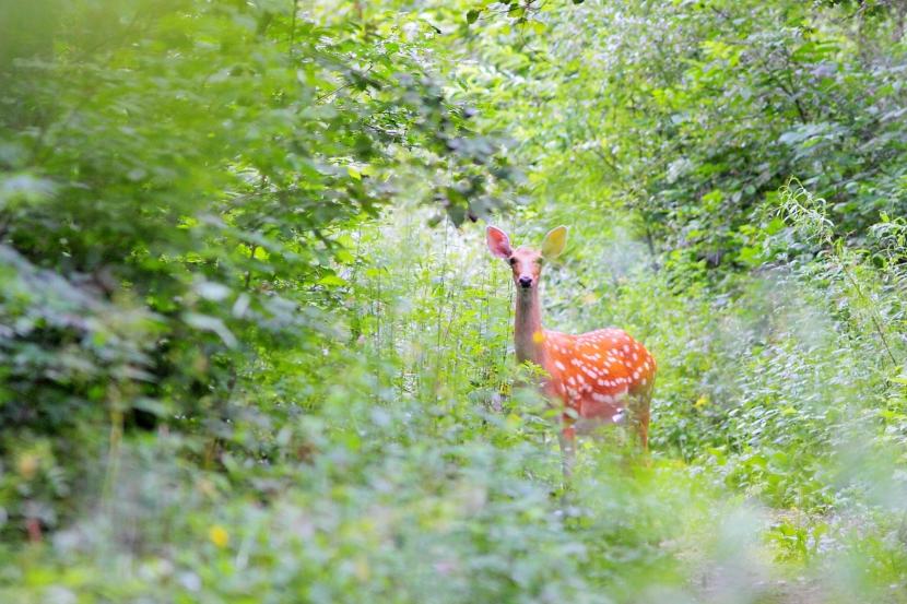 作品名:中国温带森林的野生动物